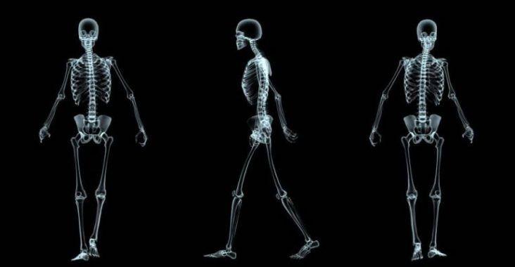 , Sistema óseo (qué es, componentes y funciones), Estudianteo