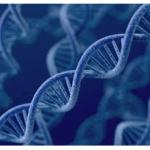 Estructura del ADN: qué es, tipos y estructuras