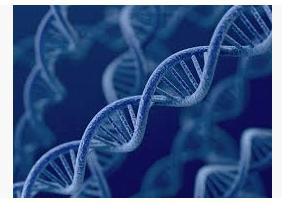 , Estructura del ADN: qué es, tipos y estructuras, Estudianteo