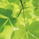 Fases de la fotosíntesis: qué es y explicación detallada de las fases