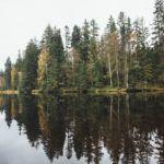 Qué es un ecosistema (componentes, tipos y ejemplos)