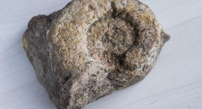 , Tipos de fósiles (con ejemplos), Estudianteo