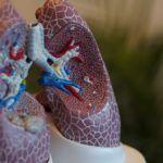 Imágenes del sistema respiratorio con explicación