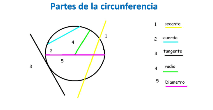 , Qué es una circunferencia, partes y tipos, Estudianteo