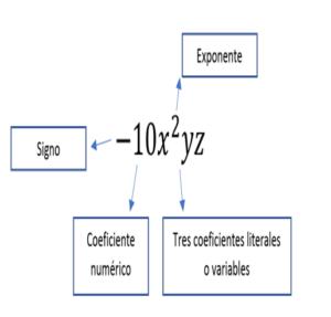 , Término Algebraico: Definición, Partes y Ejemplos, Estudianteo